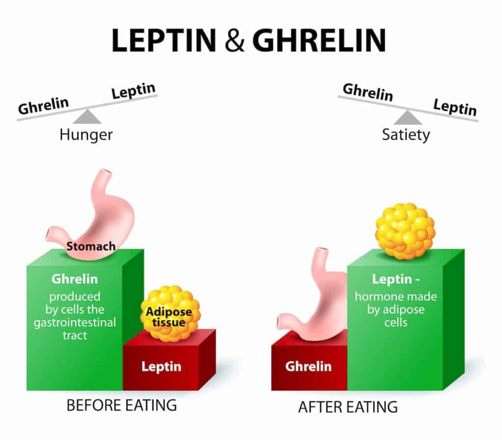 Ghrelin and leptin - hormones regulating appetite - post on How Much Weight Do You Lose Overnight